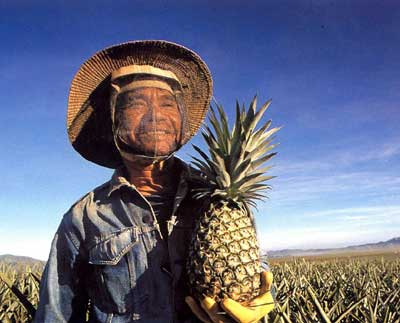 pineapple farmer bukidnon