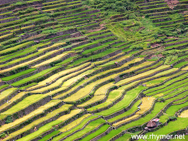 Banaue rice terraces for Terraces opening times